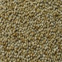 Dried Green Millet Seeds, 15 %, Packaging Size: 30 Kg, Also Available In 50 Kg