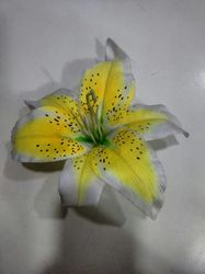 Multicolor Lily Flower