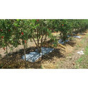 Fruits Mulching Film
