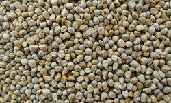 Indian Machine Clean Green Millet (Bajara), Organic