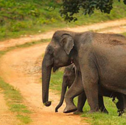 Bandipur National Park Holiday Tour Packages