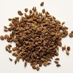 Carom/Thymol/Ajwain Seed For Cold Storage Rental Services