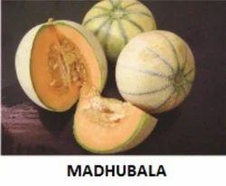 Mangal Dev research vegetable seed madhubala