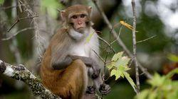 Monkey Control Service