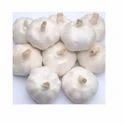 Indian Garlic