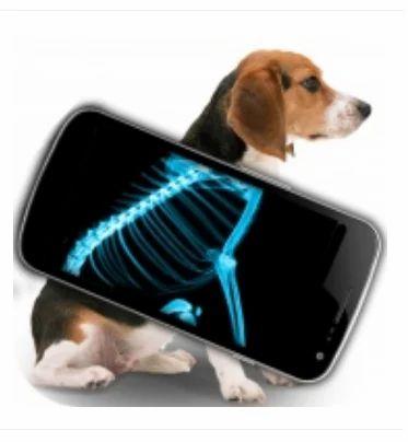 Radiology Treatments Services, Radiology Job Work