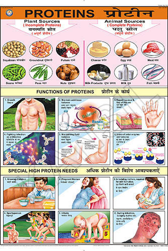 Full Color Laminated Paper Proteins For Food And Nutrition Chart
