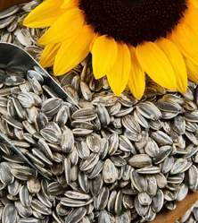 Sunflower Seeds, Pack Size: 25 Kg