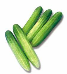 Cucumber Seeds Maria, Pack Size: 25 Gram