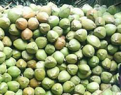 Fresh Green Pollachi Tender Coconuts