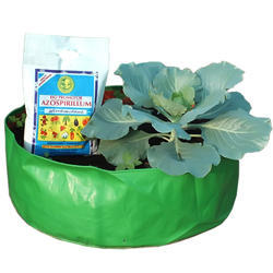 Paddy Azospirillum Bio Fertilizers
