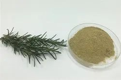 Rosemary Extract/Oil