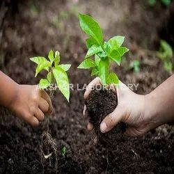 Bio Fertilizers Testing Services