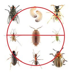 Commercial Pest Control Services For Cockroach, Ant, Bed Bug, Wood Borer