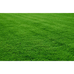 Selection Lawn Grass Carpet