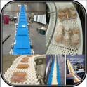 Hygienic Food Grade Conveyor Systems