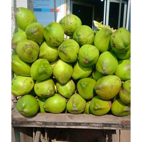 A Grade Solid Green Tender Coconut, Packaging Size: 50 Kg, Coconut Size: Large