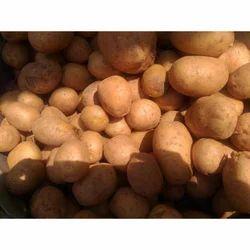 Expose Fresh Potato