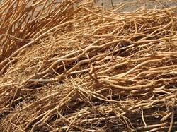 Vetiver Roots / Camel Grass Roots