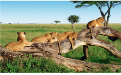 Wildlife Tour Packages : Encounter With Peace & Wildlife