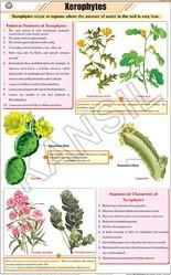Xerophytes For Botany Chart