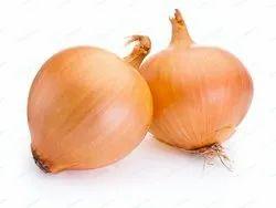 Desi Pyaj Beej Onion Seed