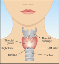 Thyroid Treatment Service