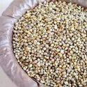 Spe Yellow Indian Good Quality Bajra For Animal Feed