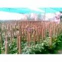 Srivari Round Coco Poles In Nurseries