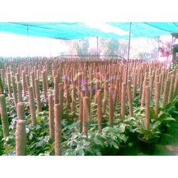 Coco Poles In Nurseries