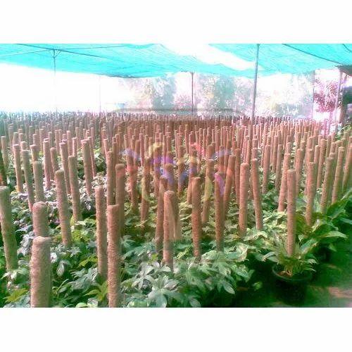 Srivari Round Coco Poles In Nurseries