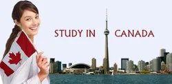 Leom International Company Study In Canada, Zirakpur