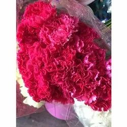Carnation Flowers, Decoration