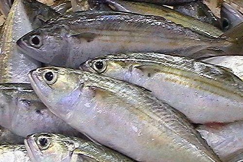 Indian Mackeral Fish Ayila Sardine Fish For Household