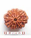 10 Mukhi Rudraksh Beads