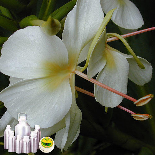 White Ginger Lilly Absolute Oil at Rs 205200 /kilogram | Ginger Lily ...