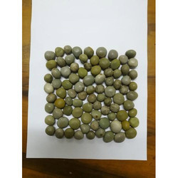 Sagar Gota Seed