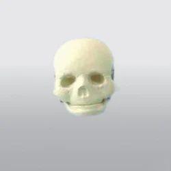 Foetal Child Infant Skull