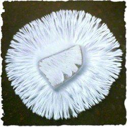 Button Mushroom Spawn