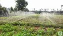 Spray Irrigation