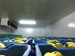 Banana Ripening Storage