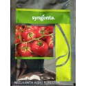 Organic Tomato Seed