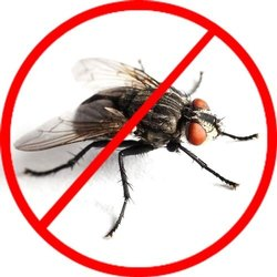House Flies Control Services