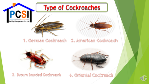Cockroach Management Service