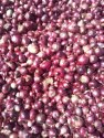 INDIAN ONIONS ( BULK ORDER & EXPORTERS INQUIRIES ONLY)