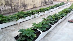 Soil Less Growing Troughs