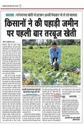 Farmer Sow Royal King Watermelon Successfully On Hard Soil