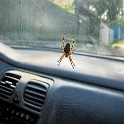 Pest Control Service For Car