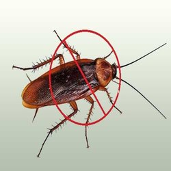 Roach Plus Control Service