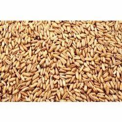 Indian Organic Wheat, High in Protein